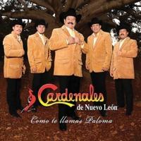 Cardenales De Nuevo…